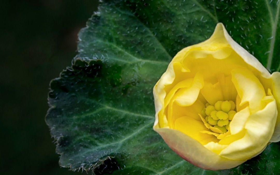 """""""The Dumas Method of Flower Photography"""" with Joyce Dumas"""