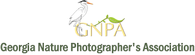 Georgia Nature Photographers Association