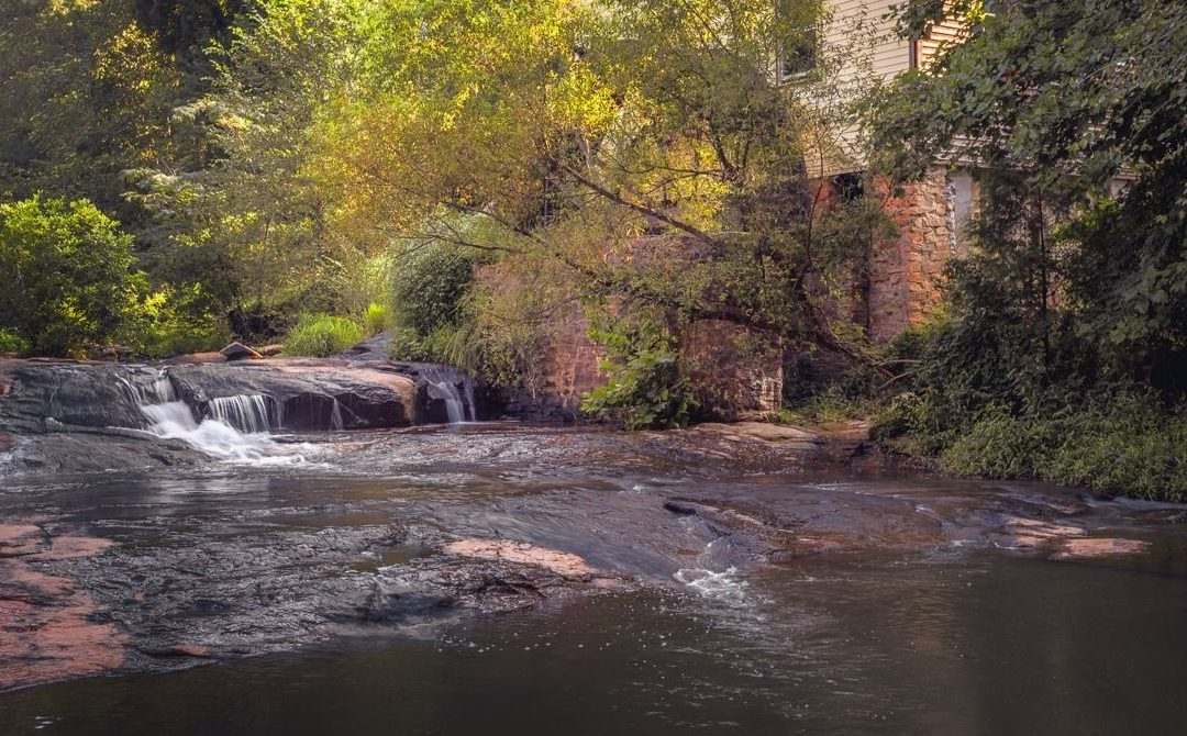 GWINNETT CHAPTER | 'Sell's Mill Park' Field Trip