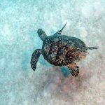Learn About Underwater Photography with Jim Squires