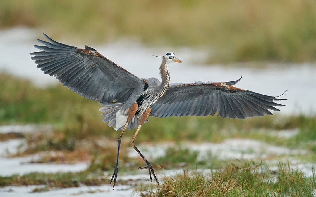 Arthur Morris – BIRDS AS ART/Jekyll Island/GNPA In-the-Field Instructional Photo-Tour