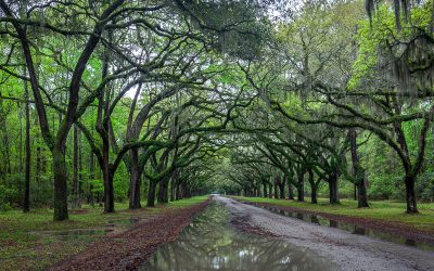 A Taste of Savannah and the Low Country