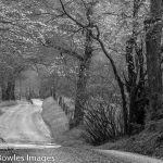 Black & White Nature Photography with Eric Bowles