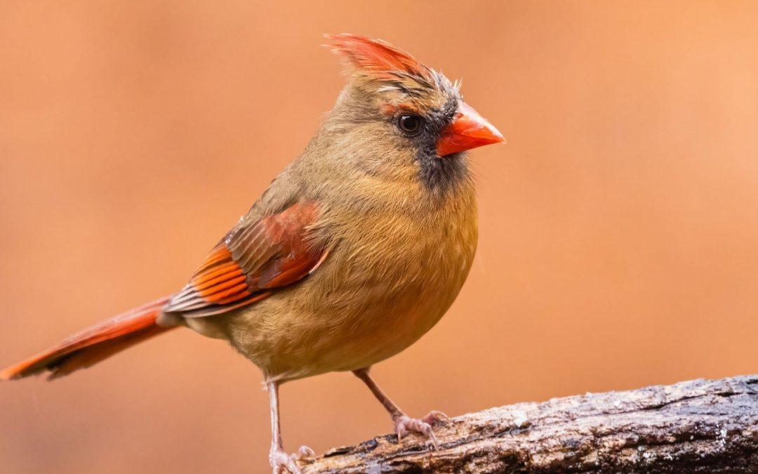 Bird Photography Close to Home