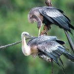 Oatland Island Wildlife Center Tour