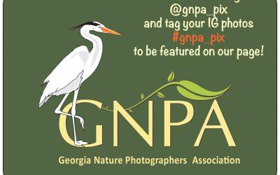 GNPA's on INSTAGRAM!